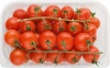 Pomidor czerw.koktajlowy 500g - Maroko / Włochy