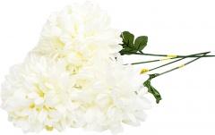 Chryzantema biała