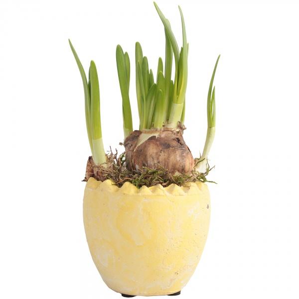 Narcyz w ceramicznym jajku