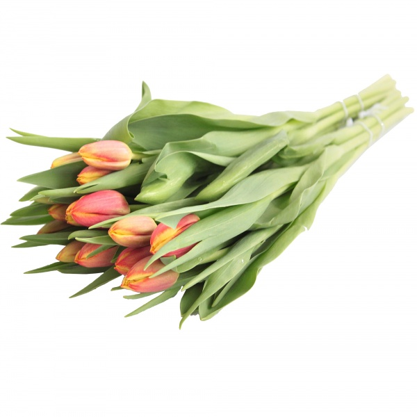 Bukiet tulipany premium 14szt